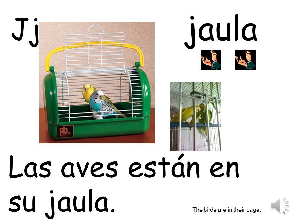 jaula Las aves están en su jaula. The birds are in their cage. Jj
