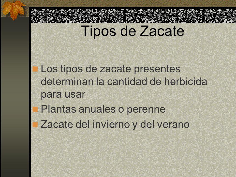 Tipos de Zacate Los tipos de zacate presentes determinan la cantidad de herbicida para usar Plantas anuales o perenne Zacate del invierno y del verano
