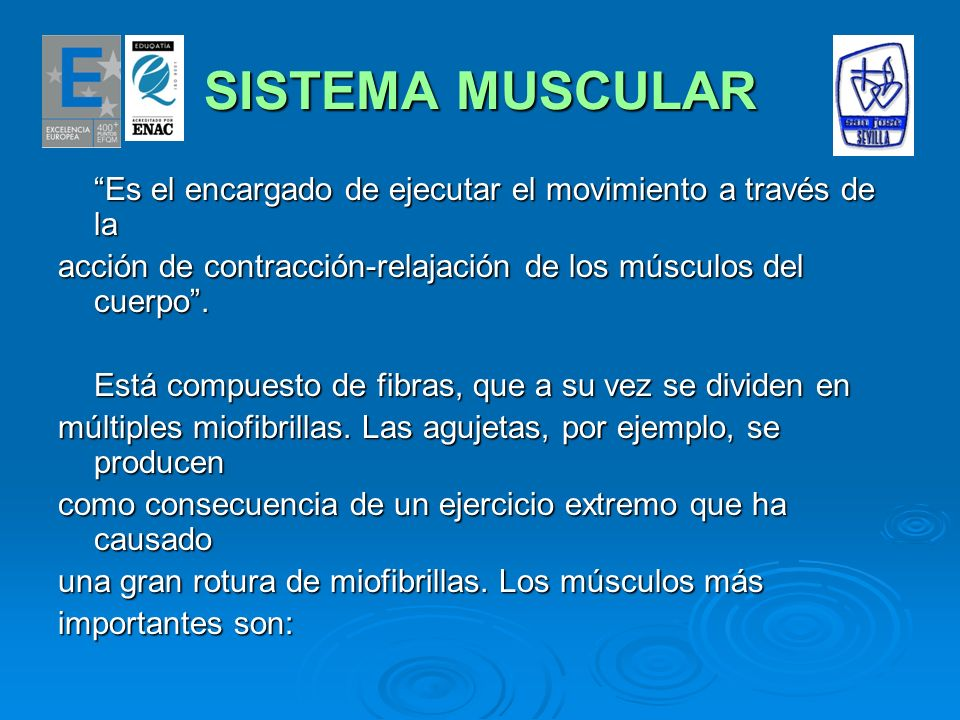 SISTEMA MUSCULAR VISTA ANTERIOR VISTA POSTERIOR - Esternocleidomastoideo.- Trapecio.