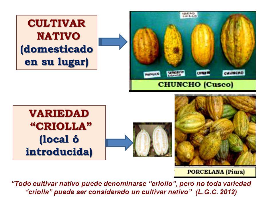 VARIEDAD CRIOLLA CRIOLLA (local ó introducida) CULTIVAR NATIVO NATIVO(domesticado en su lugar) Todo cultivar nativo puede denominarse criollo, pero no