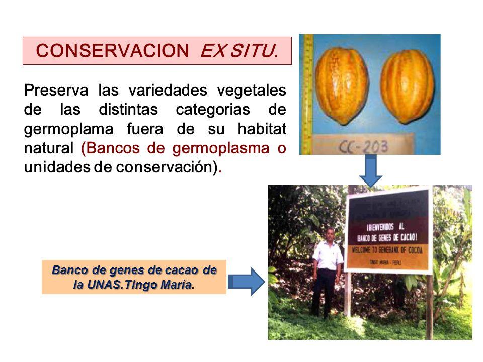 Preserva las variedades vegetales de las distintas categorias de germoplama fuera de su habitat natural (Bancos de germoplasma o unidades de conservac