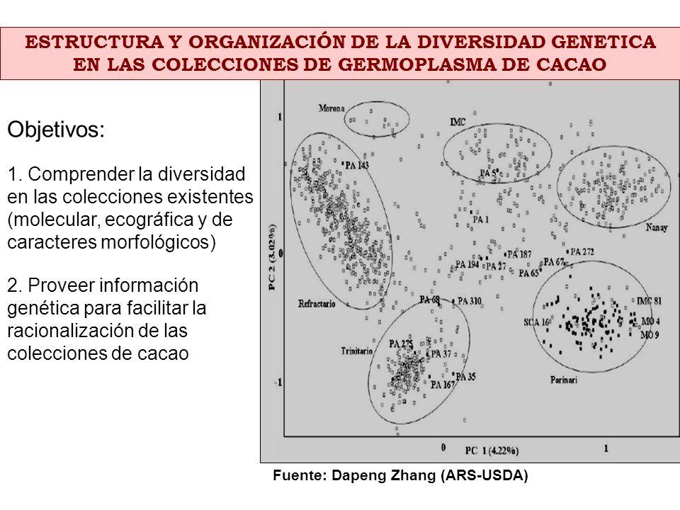 ESTRUCTURA Y ORGANIZACIÓN DE LA DIVERSIDAD GENETICA EN LAS COLECCIONES DE GERMOPLASMA DE CACAO Fuente: Dapeng Zhang (ARS-USDA) Objetivos: 1. Comprende