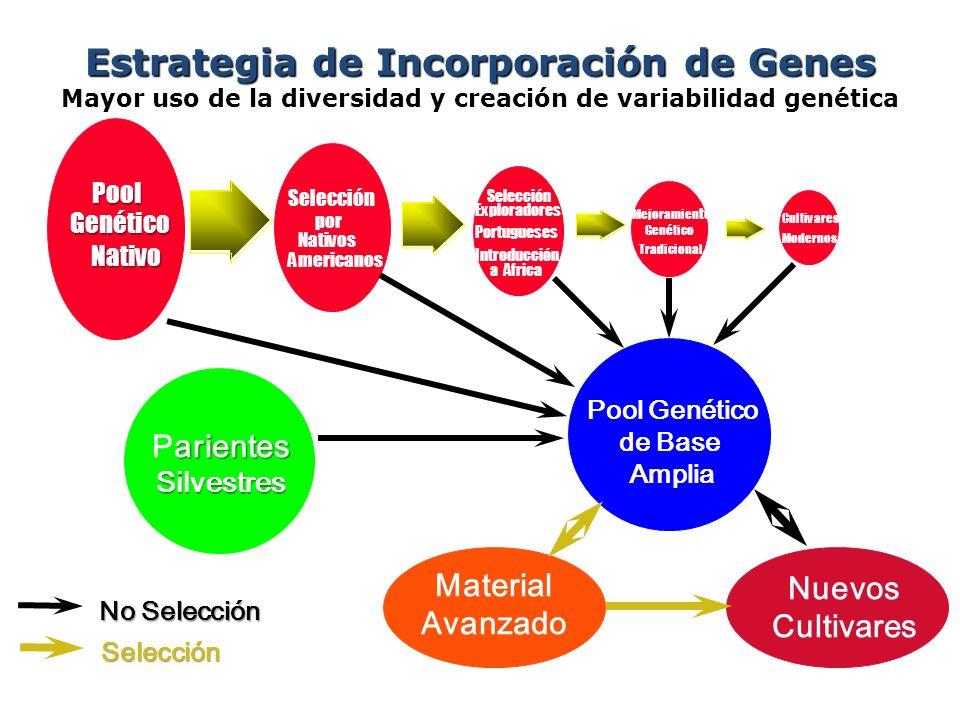 Estrategia de Incorporación de Genes Estrategia de Incorporación de Genes Mayor uso de la diversidad y creación de variabilidad genéticaPoolGenético N