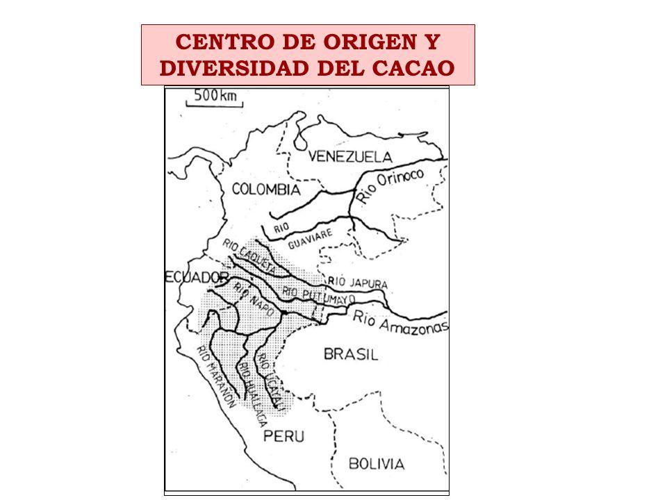 CENTRO DE ORIGEN Y DIVERSIDAD DEL CACAO