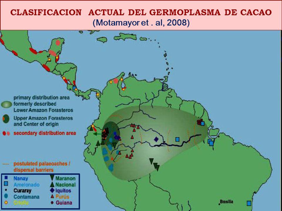 ESPECIES O PARIENTES SILVESTRES DEL CACAO (Theobroma ssp.) -Theobroma grandiflorum (copuazu) - Thebroma bicolor (macambo) -Theobroma mamosum -Theobroma gileri, - etc.
