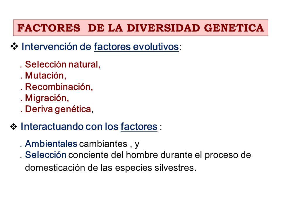 Intervención de factores evolutivos :. Selección natural,. Mutación,. Recombinación,. Migración,. Deriva genética, Interactuando con los factores :. A