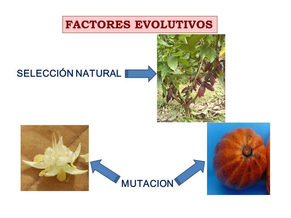 PRIMERAS EXPEDICIONES DE RECOLECCION DE GERMOPLASMA DE CACAO PERUANO En 1938 y 1943: Dr.