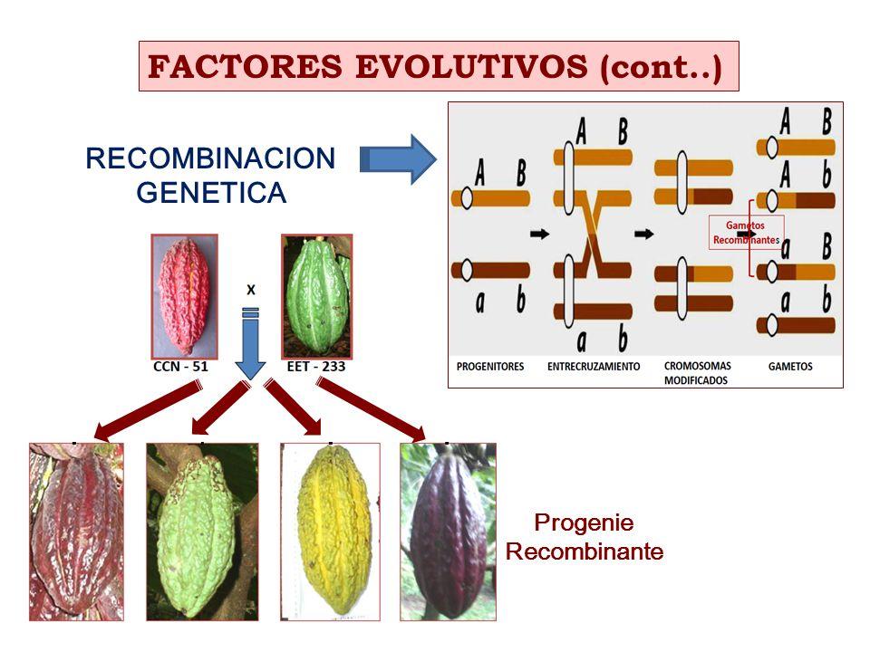 RECOMBINACION GENETICA FACTORES EVOLUTIVOS (cont..) Progenie Recombinante