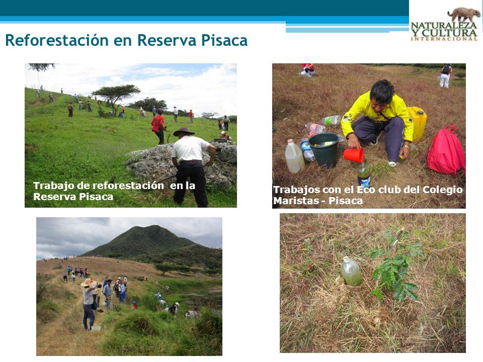 Trabajo de reforestación en la Reserva Pisaca Trabajos con el Eco club del Colegio Maristas - Pisaca Reforestación en Reserva Pisaca