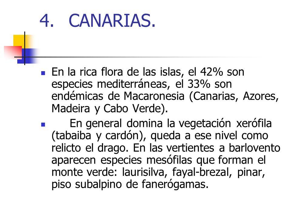 4.CANARIAS. En la rica flora de las islas, el 42% son especies mediterráneas, el 33% son endémicas de Macaronesia (Canarias, Azores, Madeira y Cabo Ve