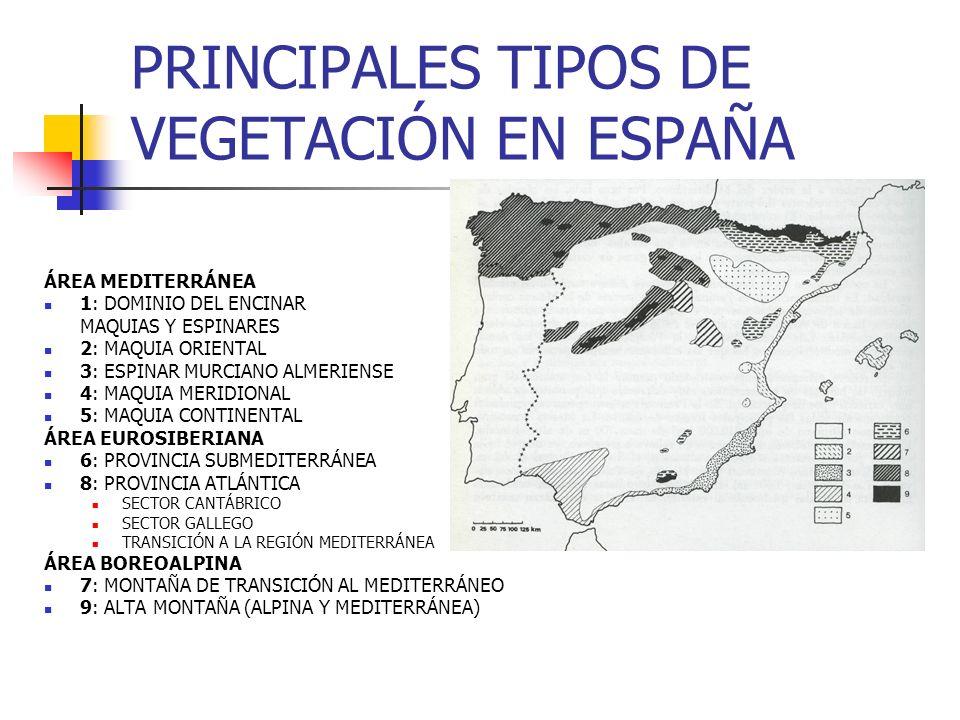 PRINCIPALES TIPOS DE VEGETACIÓN EN ESPAÑA ÁREA MEDITERRÁNEA 1: DOMINIO DEL ENCINAR MAQUIAS Y ESPINARES 2: MAQUIA ORIENTAL 3: ESPINAR MURCIANO ALMERIEN