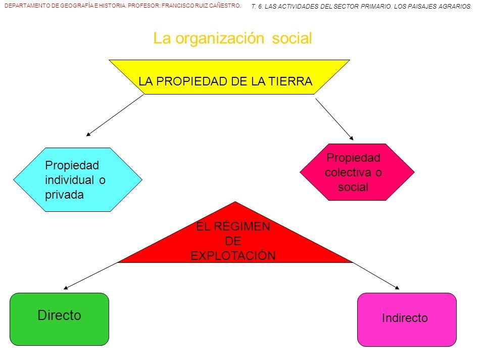 T. 6. LAS ACTIVIDADES DEL SECTOR PRIMARIO. LOS PAISAJES AGRARIOS.