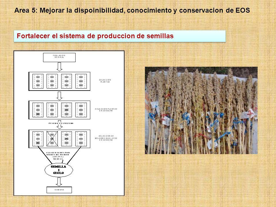 Area 7: Promocion de la cooperacion y toma de conciencia sobre el valor de cultivos proirizados Desarrollo de redes de trabajo, construccion de sinergias e intercambio de experiencias Implementacion de un Panel Bi-nacional sobre La contribucion de los Granos Andinos en la nutricion de niños (80 profesoras del nivel basico) Soporte a la Mesa de Trabajo Producto Quinua : 35 instituciones (productores primarios, transformadores, organismos publicos, privados, Universidades, Institutos y organizaciones de productores.