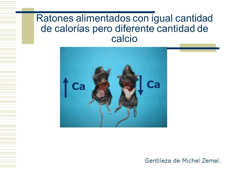 Ratones alimentados con igual cantidad de calorías pero diferente cantidad de calcio Gentileza de Michel Zemel. Ca