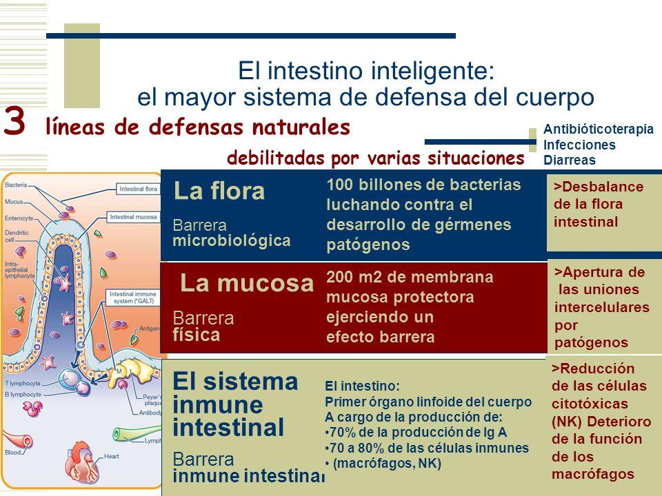 3 líneas de defensas naturales Antibióticoterapia Infecciones Diarreas La flora Barrera microbiológica 100 billones de bacterias luchando contra el de