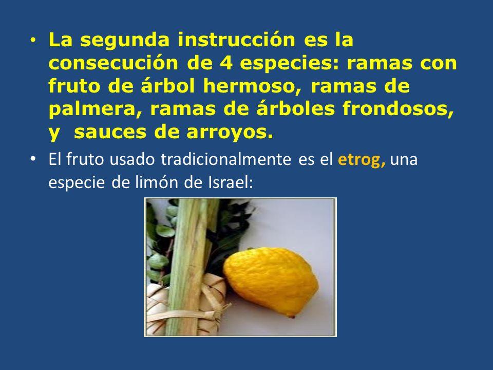 La segunda instrucción es la consecución de 4 especies: ramas con fruto de árbol hermoso, ramas de palmera, ramas de árboles frondosos, y sauces de arroyos.