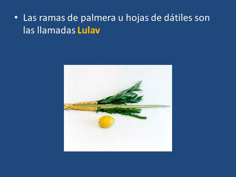 Las ramas de palmera u hojas de dátiles son las llamadas Lulav