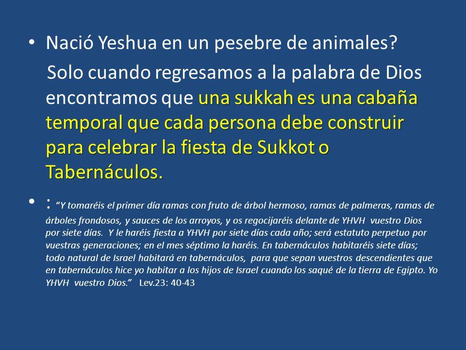 Nació Yeshua en un pesebre de animales.