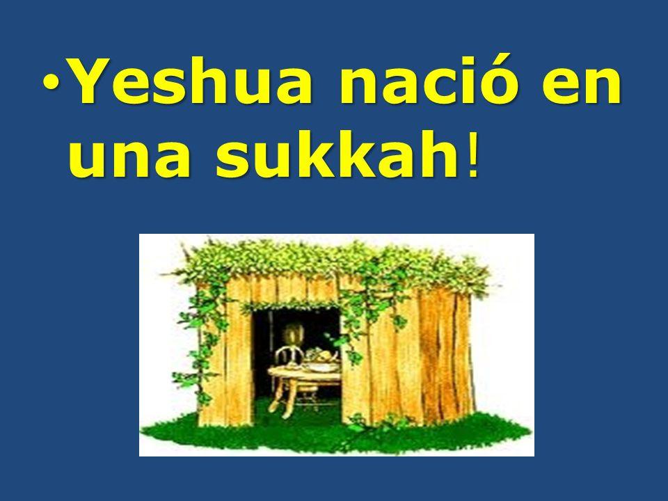 Yeshua nació en una sukkah! Yeshua nació en una sukkah!