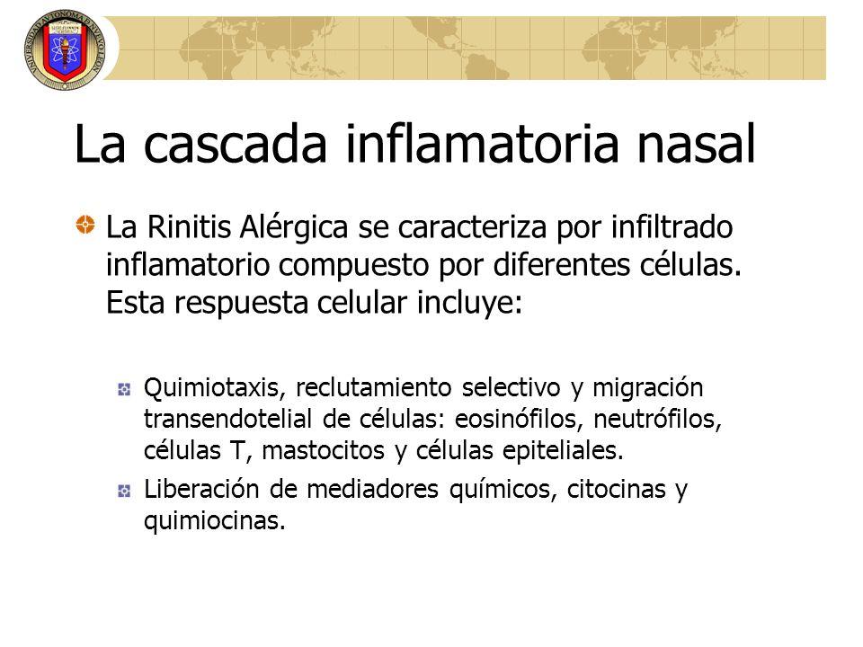 La cascada inflamatoria nasal La Rinitis Alérgica se caracteriza por infiltrado inflamatorio compuesto por diferentes células. Esta respuesta celular