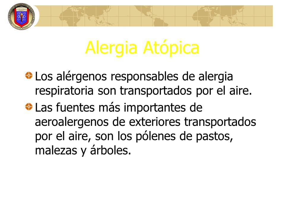 Alergia Atópica Los alérgenos responsables de alergia respiratoria son transportados por el aire. Las fuentes más importantes de aeroalergenos de exte