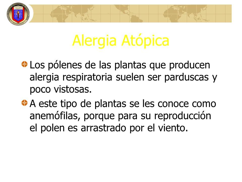 Alergia Atópica Los pólenes de las plantas que producen alergia respiratoria suelen ser parduscas y poco vistosas. A este tipo de plantas se les conoc