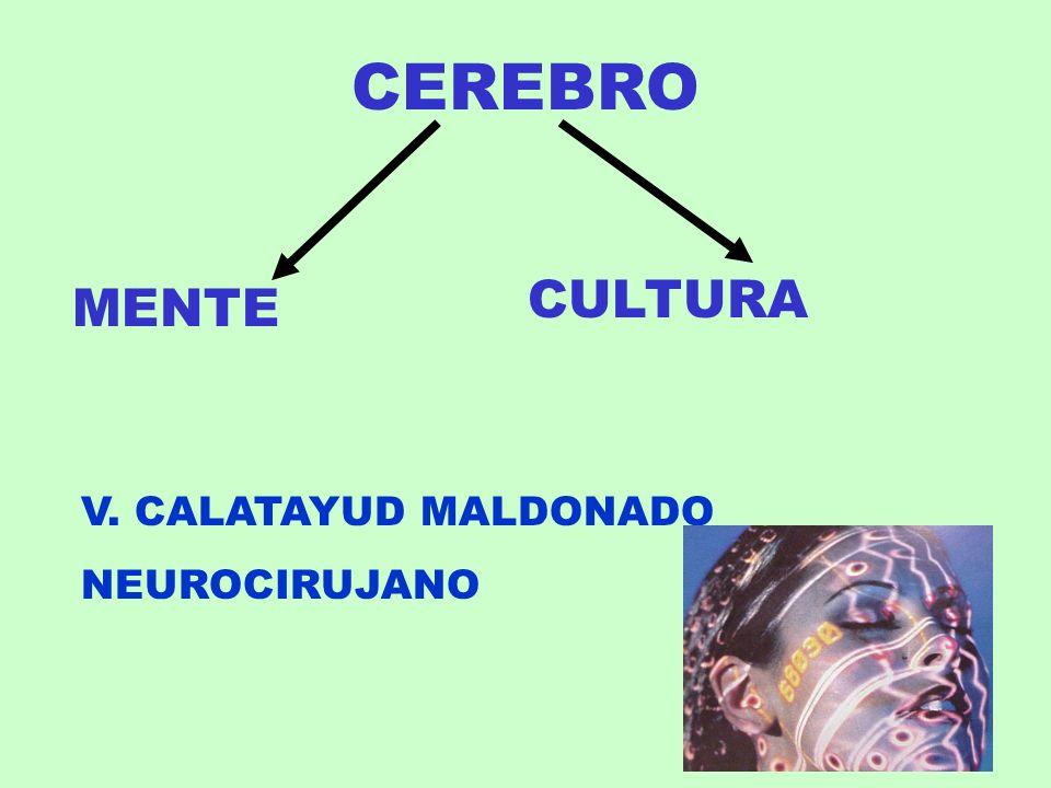 CEREBRO MENTE CULTURA V. CALATAYUD MALDONADO NEUROCIRUJANO