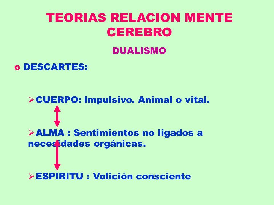 TEORIAS RELACION MENTE CEREBRO DUALISMO o DESCARTES: CUERPO: Impulsivo. Animal o vital. ALMA : Sentimientos no ligados a necesidades orgánicas. ESPIRI