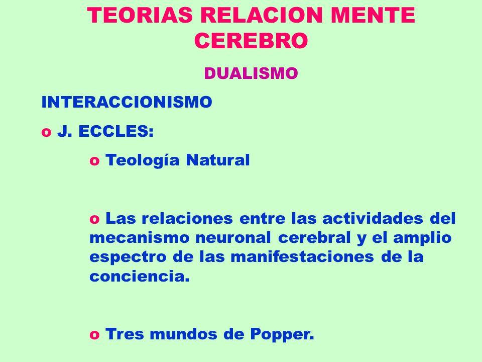 TEORIAS RELACION MENTE CEREBRO DUALISMO INTERACCIONISMO o J. ECCLES: o Teología Natural o Las relaciones entre las actividades del mecanismo neuronal