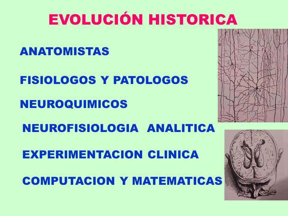 EVOLUCIÓN HISTORICA ANATOMISTAS FISIOLOGOS Y PATOLOGOS NEUROQUIMICOS NEUROFISIOLOGIA ANALITICA EXPERIMENTACION CLINICA COMPUTACION Y MATEMATICAS