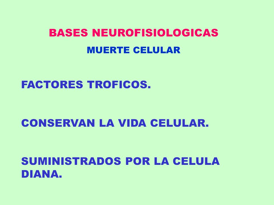 BASES NEUROFISIOLOGICAS MUERTE CELULAR FACTORES TROFICOS. CONSERVAN LA VIDA CELULAR. SUMINISTRADOS POR LA CELULA DIANA.