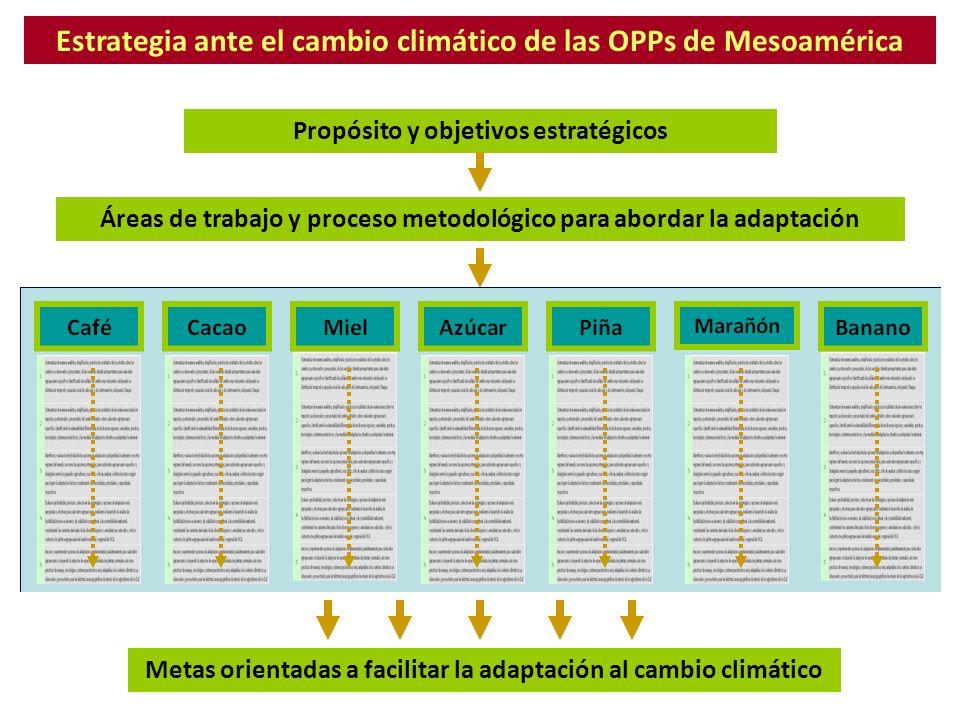 Estrategia ante el cambio climático de las OPPs de Mesoamérica Propósito y objetivos estratégicos Áreas de trabajo y proceso metodológico para abordar