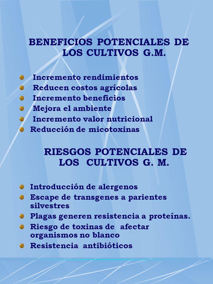 BENEFICIOS POTENCIALES DE LOS CULTIVOS G.M. Incremento rendimientos Reducen costos agrícolas Incremento beneficios Mejora el ambiente Incremento valor
