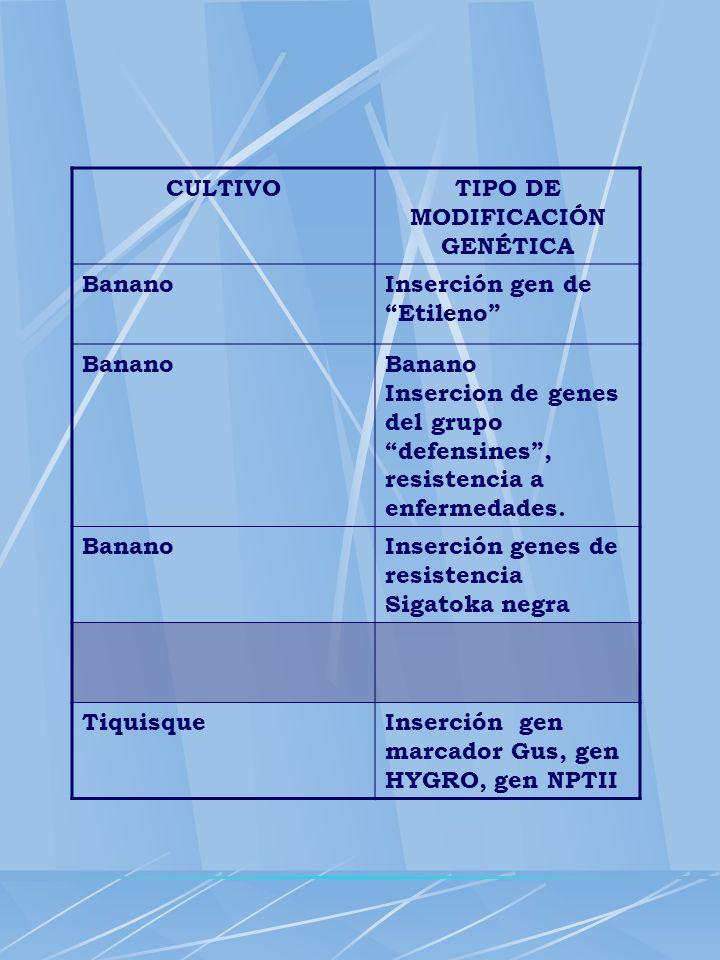 CULTIVOTIPO DE MODIFICACIÓN GENÉTICA BananoInserción gen de Etileno BananoBanano Insercion de genes del grupo defensines, resistencia a enfermedades.