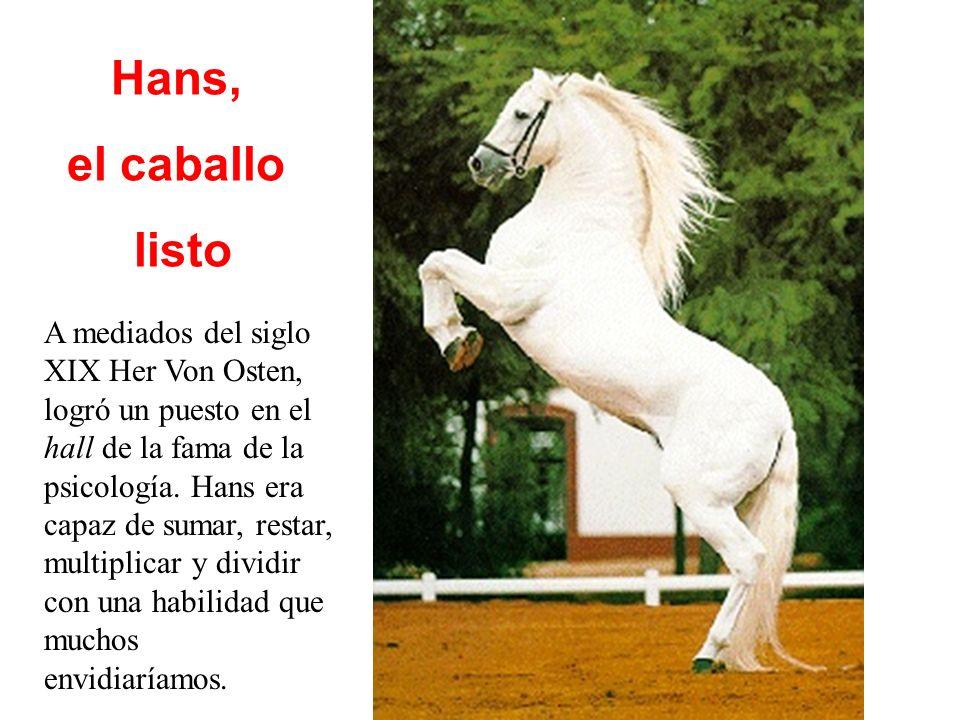 Hans, el caballo listo A mediados del siglo XIX Her Von Osten, logró un puesto en el hall de la fama de la psicología.