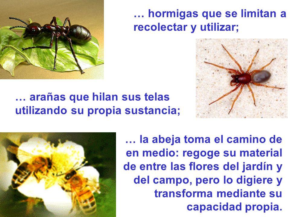 … hormigas que se limitan a recolectar y utilizar; … arañas que hilan sus telas utilizando su propia sustancia; … la abeja toma el camino de en medio: regoge su material de entre las flores del jardín y del campo, pero lo digiere y transforma mediante su capacidad propia.