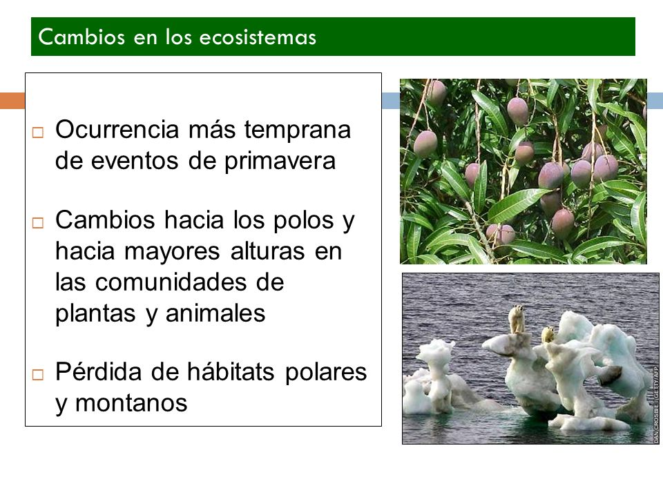 Ocurrencia más temprana de eventos de primavera Cambios hacia los polos y hacia mayores alturas en las comunidades de plantas y animales Pérdida de há
