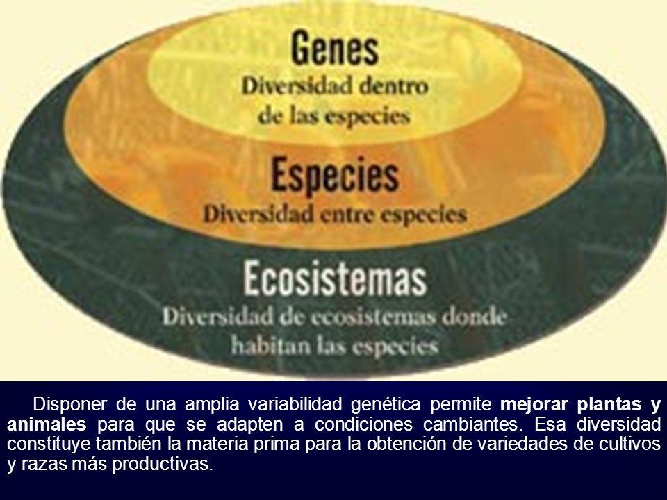 Disponer de una amplia variabilidad genética permite mejorar plantas y animales para que se adapten a condiciones cambiantes. Esa diversidad constituy