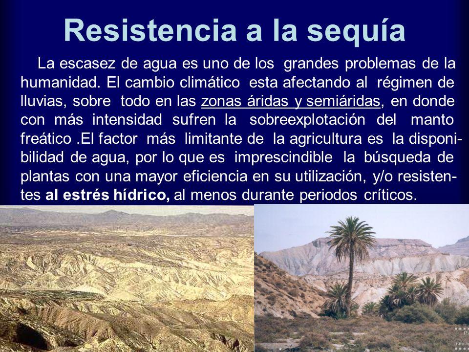 Resistencia a la sequía La escasez de agua es uno de los grandes problemas de la humanidad. El cambio climático esta afectando al régimen de lluvias,