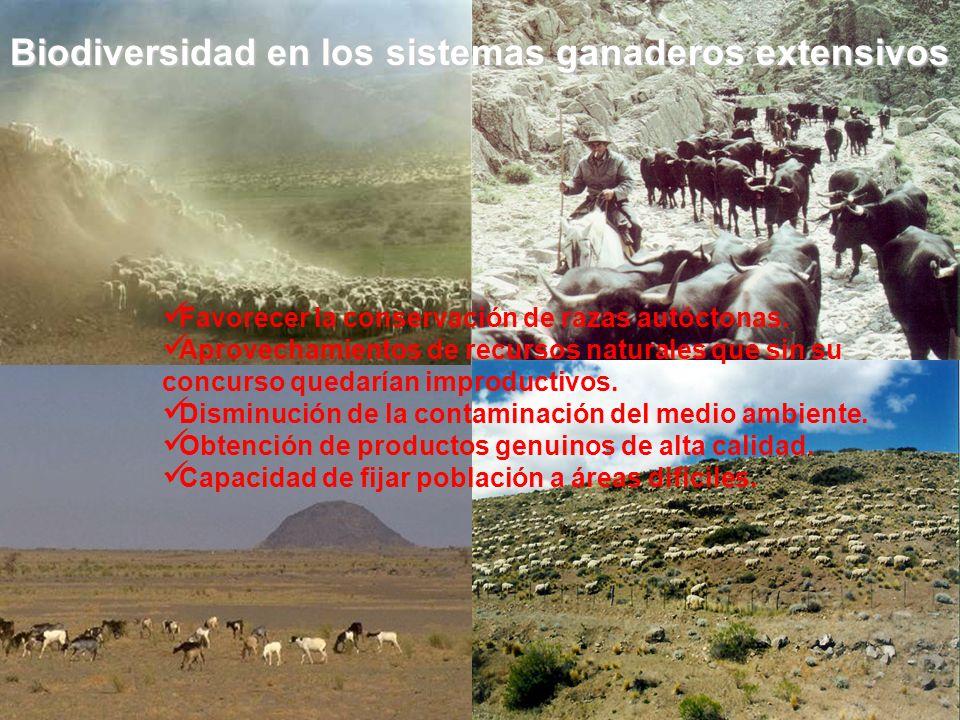 Biodiversidad en los sistemas ganaderos extensivos Favorecer la conservación de razas autóctonas. Aprovechamientos de recursos naturales que sin su co