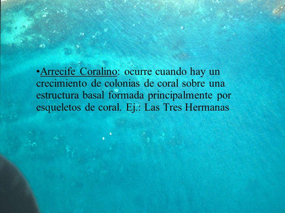 Arrecife Coralino: ocurre cuando hay un crecimiento de colonias de coral sobre una estructura basal formada principalmente por esqueletos de coral.