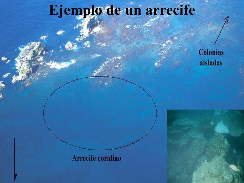 Ejemplo de un arrecife