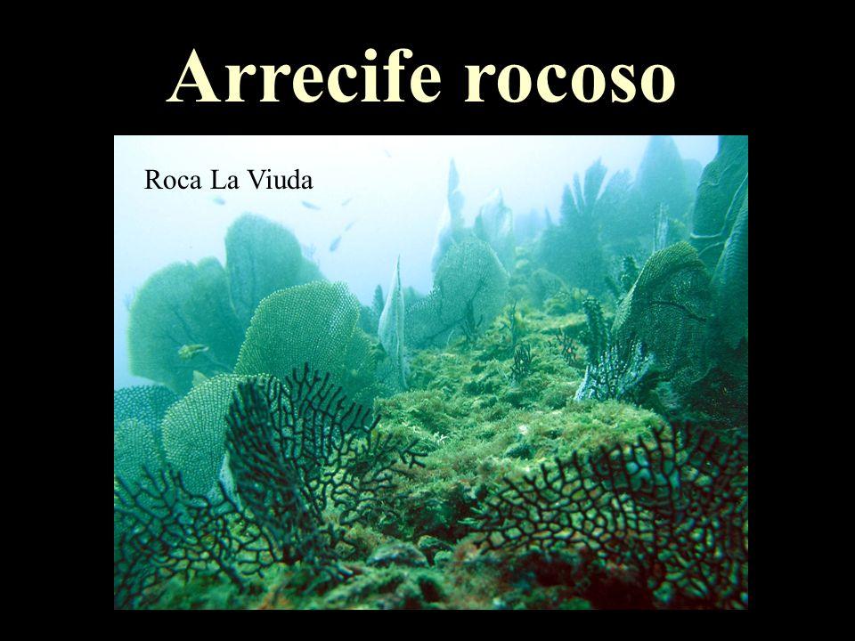 Arrecife rocoso Roca La Viuda