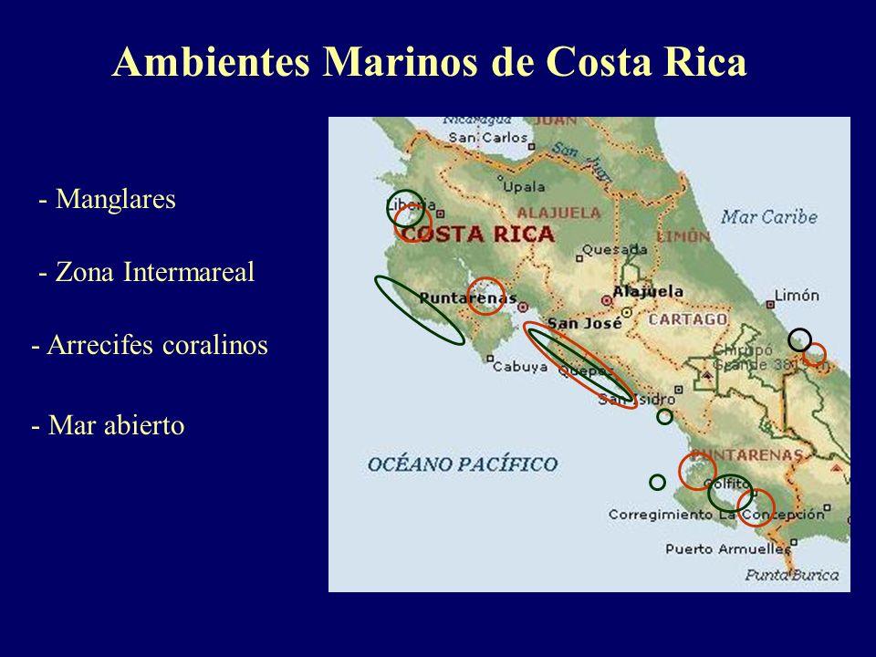 Ambientes Marinos de Costa Rica - Manglares - Zona Intermareal - Arrecifes coralinos - Mar abierto