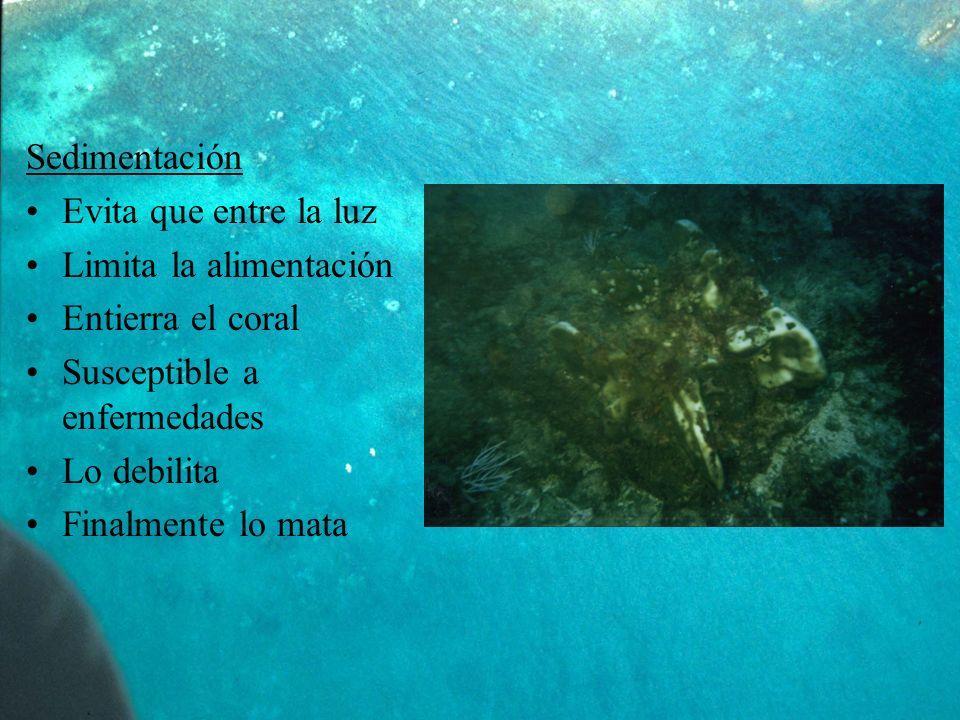 Sedimentación Evita que entre la luz Limita la alimentación Entierra el coral Susceptible a enfermedades Lo debilita Finalmente lo mata