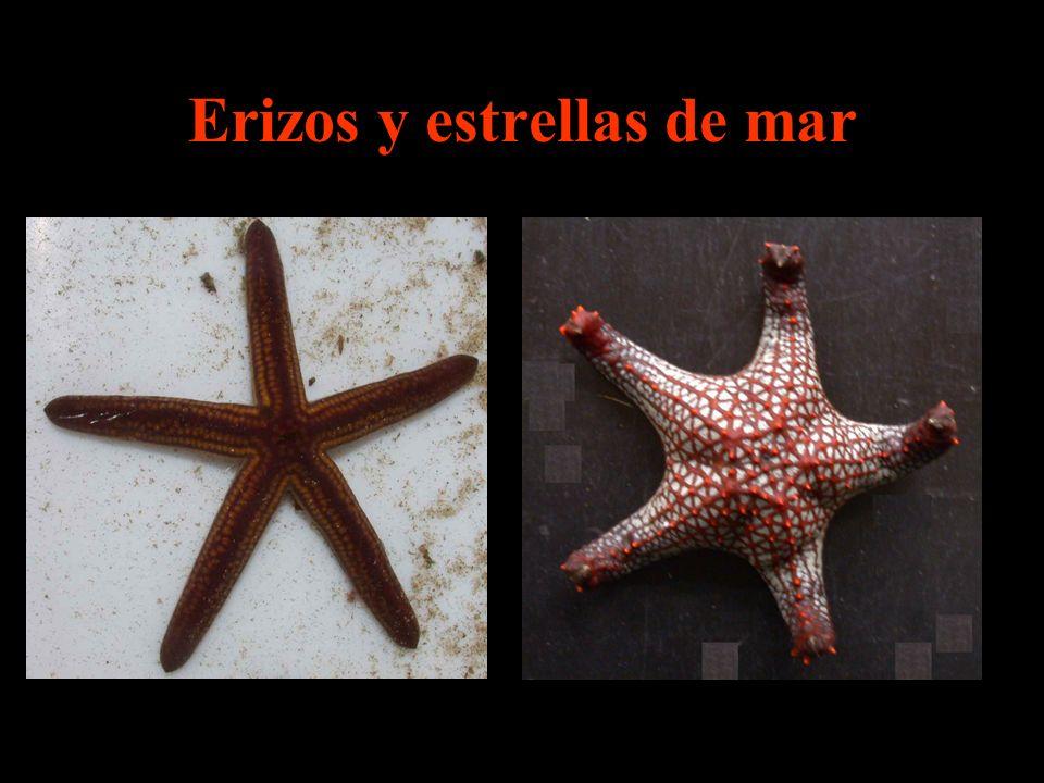 Erizos y estrellas de mar