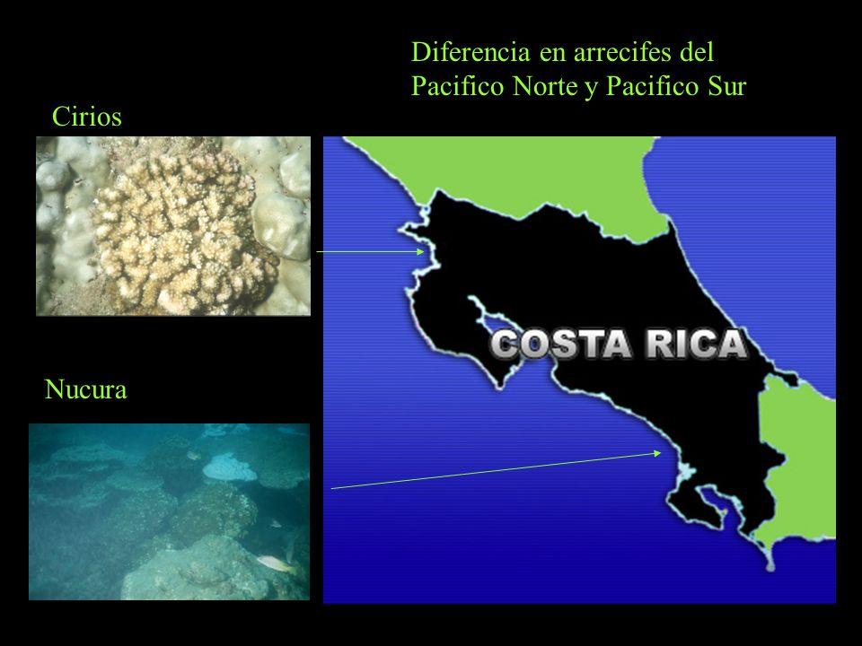 Diferencia en arrecifes del Pacifico Norte y Pacifico Sur Cirios Nucura