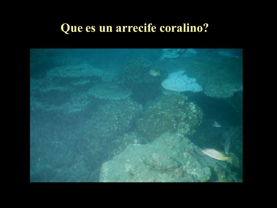 Que es un arrecife coralino?