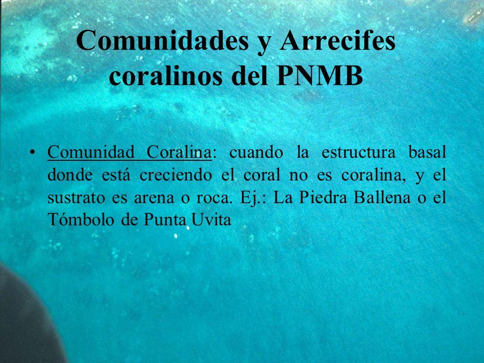 Comunidades y Arrecifes coralinos del PNMB Comunidad Coralina: cuando la estructura basal donde está creciendo el coral no es coralina, y el sustrato es arena o roca.