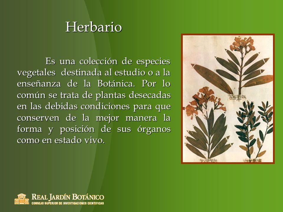 Herbario Es una colección de especies vegetales destinada al estudio o a la enseñanza de la Botánica. Por lo común se trata de plantas desecadas en la